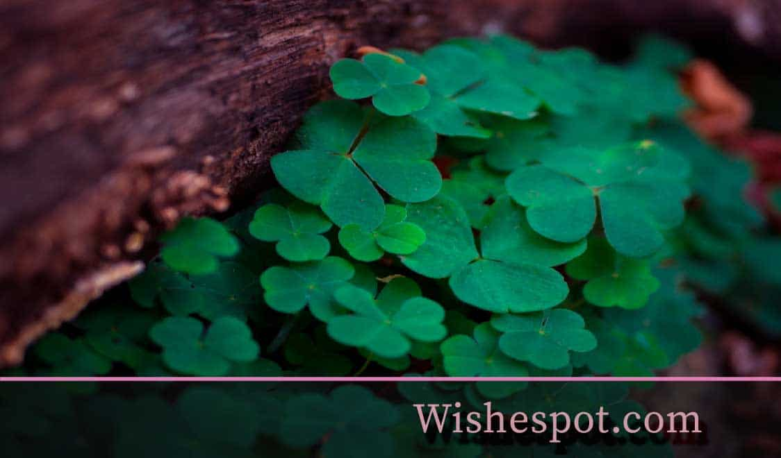 St. Patrick's Day Wishes-wishespot