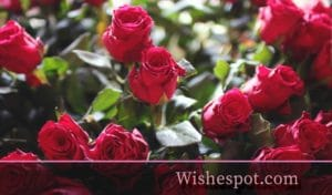 Valentine's Day Wishes-wishespot