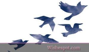 farewell wishespot