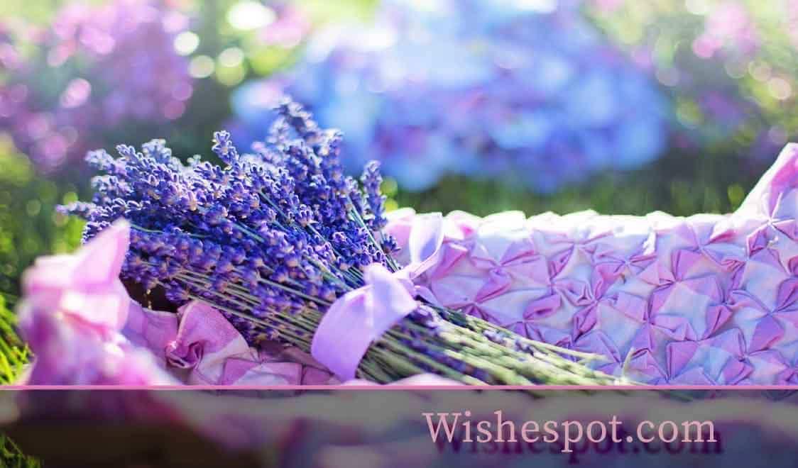 summer season quotes -wishespot