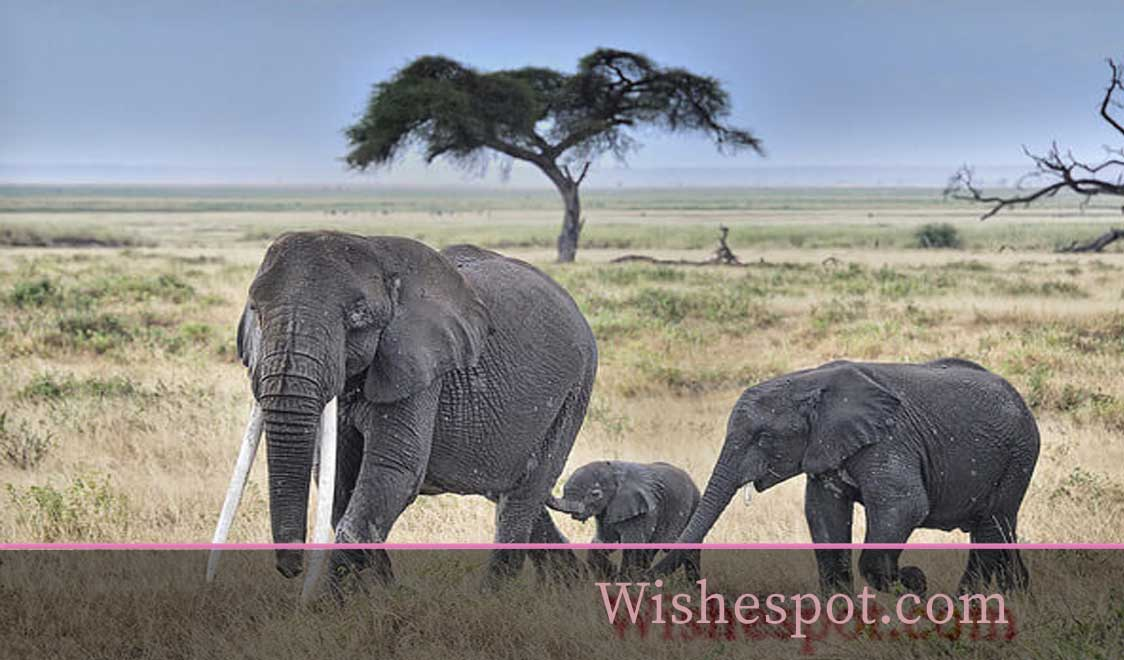 Elephant Sayings and Quotes-wishespot